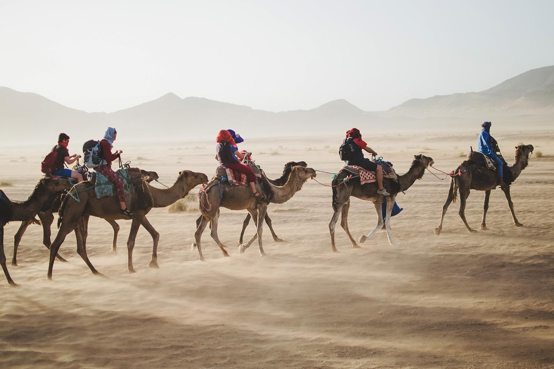 schareimprojekt-incentive-team-teamwork-sport-spass-teambuilding-zusammenhalt-reise-wüste-kamele-ausflug